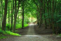 绿色森林路可以为旅行自然风景exp使用 图库摄影