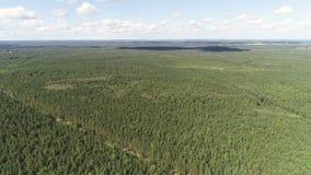 绿色森林风景的空中美丽的景色与天空和森林的 股票视频