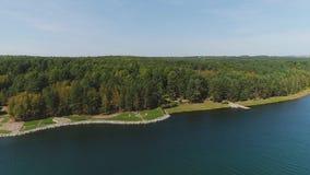 绿色森林,河通风看法在夏天晴天 4K 影视素材