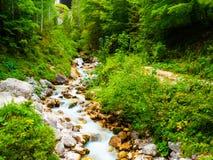 绿色森林,清澈小河 免版税库存照片