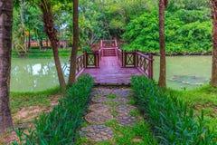 绿色植物和树围拢的精密木桥 库存图片