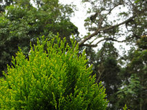 绿色植物和树, 100%自然 @阿维拉山,加拉加斯-委内瑞拉 图库摄影