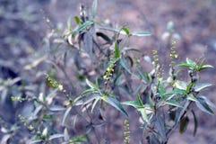 绿色植物和花 免版税库存图片