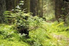 绿色植物和草在爆沸在森林里 免版税库存图片