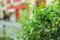 绿色植物在城市 库存照片