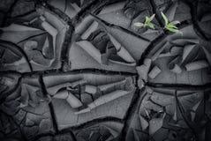 绿色植物在干燥地面增长 免版税库存照片
