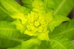 绿色植物在森林里 免版税库存图片