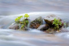 绿色植物在水中,被充斥的河 免版税库存照片