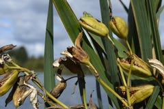 绿色植物在湖旁边长大 图库摄影
