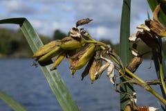 绿色植物在湖旁边长大 免版税库存图片