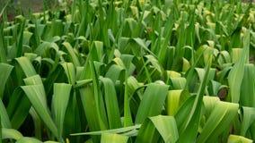 绿色植物在湖附近的植物园里 库存图片