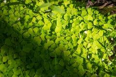 绿色植物射击  图库摄影