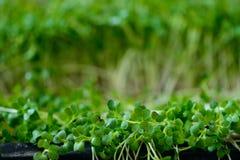 绿色植物射击 库存图片