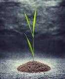 绿色植物年轻人 免版税图库摄影