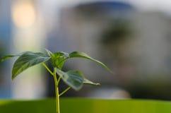 绿色植物年轻人 免版税库存图片