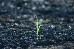 绿色植物微小的年轻人 库存图片