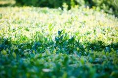 绿色植物树和灌木在一个热的夏天 库存照片