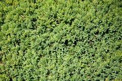 绿色植物树和灌木在一个热的夏天 免版税库存照片