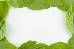 绿色植物框架 库存照片