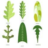 绿色植物的汇集 捆绑鲜美菜和在白色背景隔绝的沙拉叶子 可口健康素食主义者或 皇族释放例证