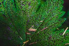 绿色植物离开腐朽 免版税库存图片