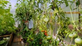 绿色植物自温室增长 股票录像