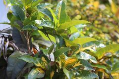 绿色植物被暴露在阳光 免版税库存照片