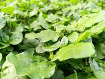 绿色植物 图库摄影