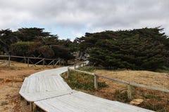 绿色植被之间的木道路在春天 免版税库存照片