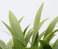 绿色植被有干净的白色背景 免版税库存图片