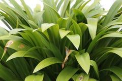 绿色植被有柔光白色背景 免版税库存图片
