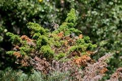 绿色植被纹理 免版税库存图片