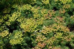 绿色植被纹理 图库摄影