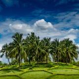 绿色椰子树 免版税库存图片