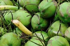 绿色椰子特写镜头出售的在街道上 免版税库存照片