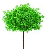 绿色槭树,3d例证 库存图片