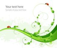 绿色模式背景、叶子和瓢虫 图库摄影