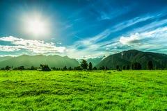 绿色横向在新西兰 免版税库存照片
