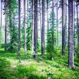 绿色横向夏天 免版税库存图片
