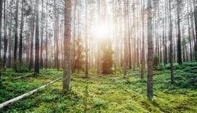绿色横向夏天 免版税图库摄影