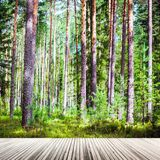 绿色横向夏天 库存图片
