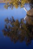 绿色横向茂盛的牧场 免版税库存照片