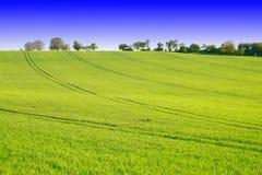 绿色横向 免版税图库摄影