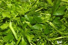 绿色毛虫假装自己,沿新鲜的绿草荷兰芹,莳萝,香菜,沙拉爬行, defocused与被弄脏 免版税库存图片