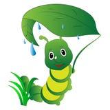 绿色毛虫在叶子下的雨中 库存例证