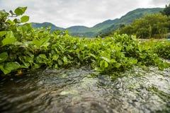 绿色水厂附近的河,瓷 免版税库存图片
