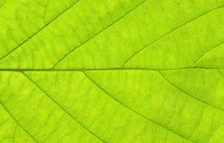绿色水平的叶子宏指令 库存照片