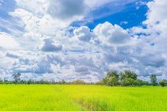 绿色水稻领域软的焦点与美丽的天空和云彩的在泰国,由射线光和透镜火光作用口气 图库摄影