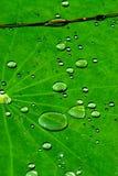 绿色水 免版税图库摄影
