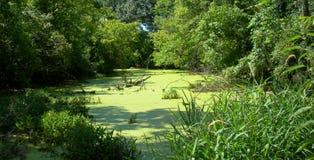 绿色池塘夏天 库存图片